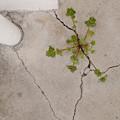 草魂 「地を砕く」