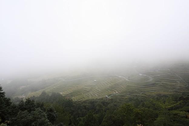 写真: 秋の丸山千枚田
