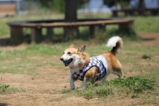 この暑さでは、焼き犬に水だった・・・。