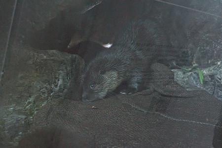 fukushima120730439