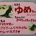 写真: tokusima120803003