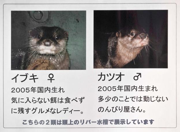 Photos: notojima100826828
