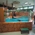 Photos: nasu-oukoku121124001