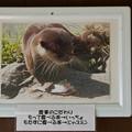 Photos: nanpara121125003