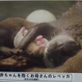 Photos: notojima121208003