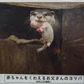 Photos: notojima121208004