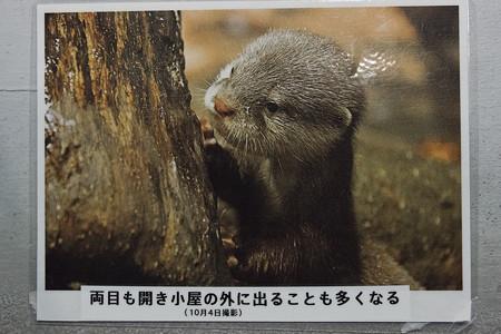 notojima121208005