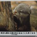 Photos: notojima121208005