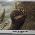Photos: notojima121208007