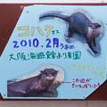 写真: hamamatsu130101005