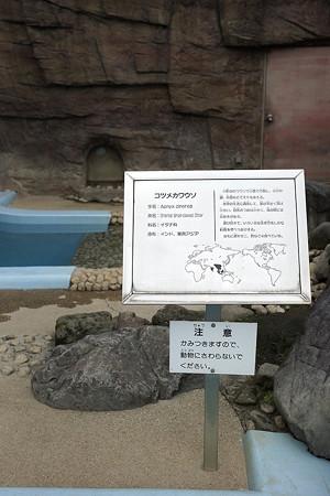 hirakawa130303003
