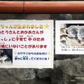 Photos: hirakawa130303005