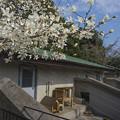 Photos: ichikawa130317244