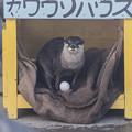 Photos: hamamatsu130101425