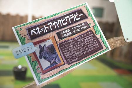 hirakata130512078