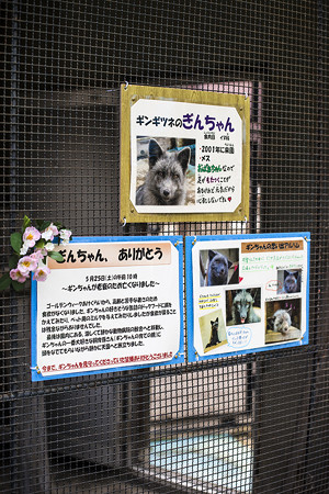 ichikawa130609004