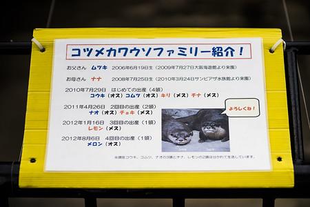ichikawa130609010