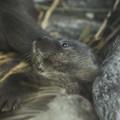 Photos: fukushima130716093