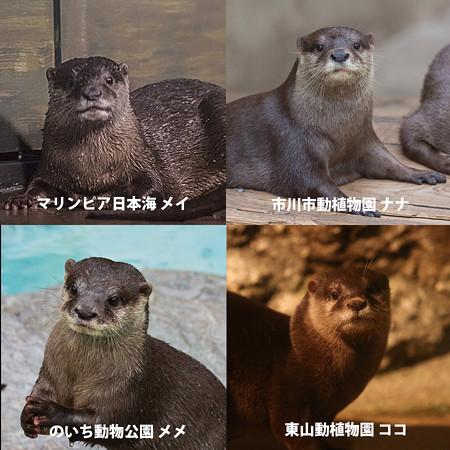 mei_nana_meme_koko