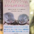 Photos: miyajima130917003