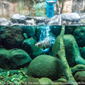 写真: zoorasia131020115
