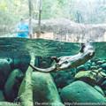 写真: zoorasia131020099