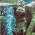 写真: zoorasia131020109