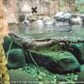 写真: zoorasia131020120