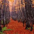 写真: 森路静寂