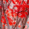 写真: 赤の杜