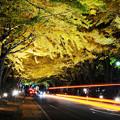 写真: ライトアップの夜