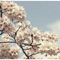 Photos: 春!