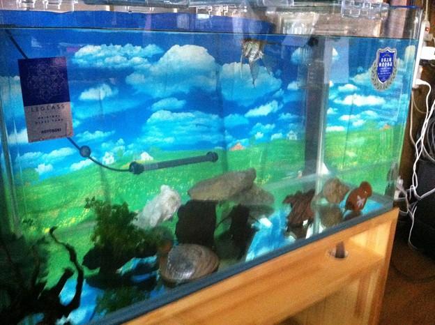 熱帯魚の水槽