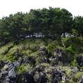 岩場から見た一本松展望台の駐車場