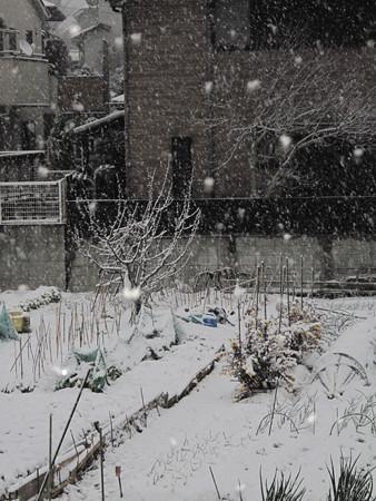 IMG_7541 2014.2.14 雪