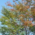 Photos: 紅葉と黄葉はまだ?