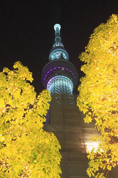 輝く木とスカイツリー