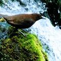 名水滝の野鳥