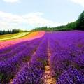 Purple load~富良野~