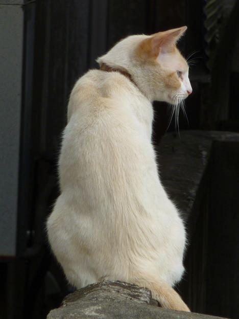 見返り美猫