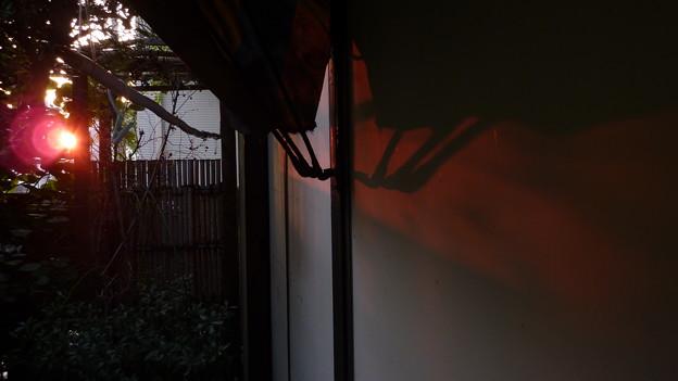 Photos: 夕陽が…