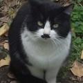 Photos: 猫も負けじと…