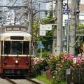 写真: 春バラとレトロ車両