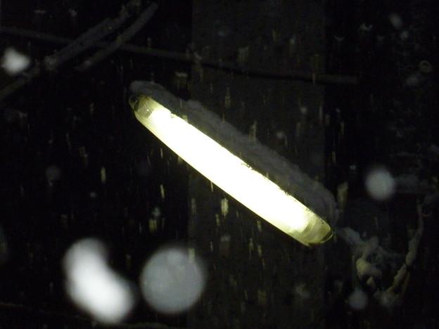 写真: 大雪と街路灯