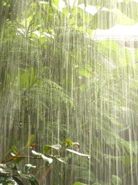 Photos: 午後の水やり