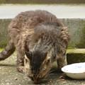 Photos: 朝食を頬張る野良猫?