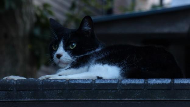 我が家周辺の野良猫たちにとって…