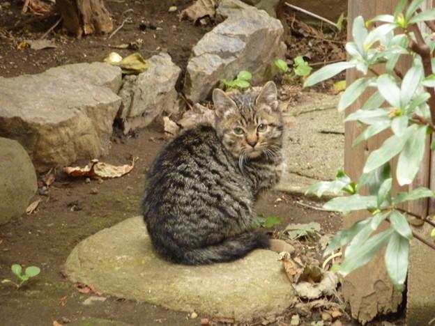 正月三日目の仔猫