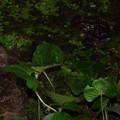 今夜の蛙さん2013.10.8