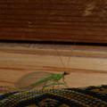 緑の虫の物語?(3話)